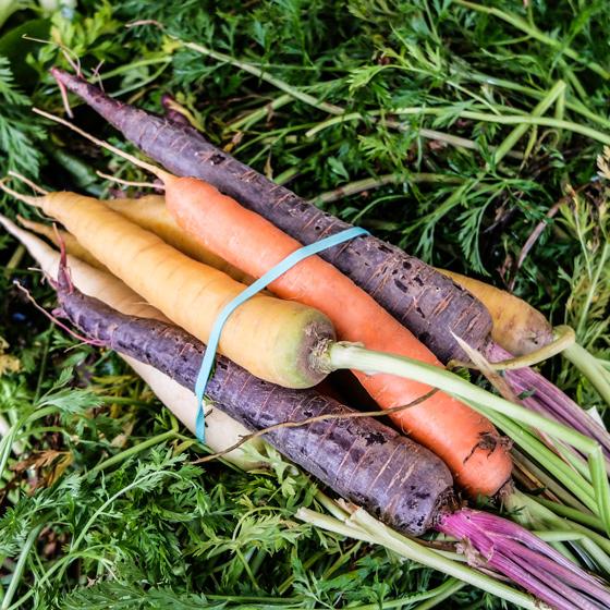 miam-legumes